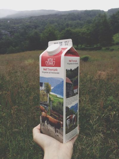 Milk from Norway 🇳🇴 Tinemelk NorwayEyeEm Nature Lover Looking Into The Future