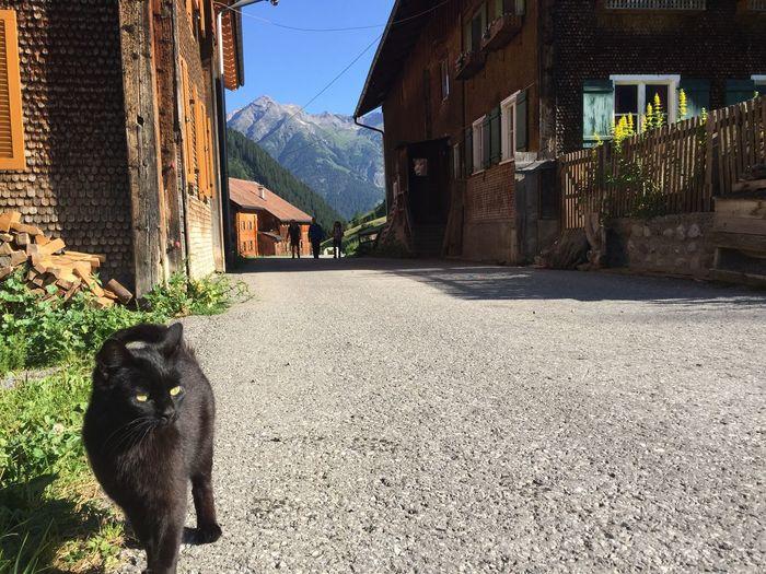 Cat is Followme - Starting A Trip Austria Alps Alpen Black Cat