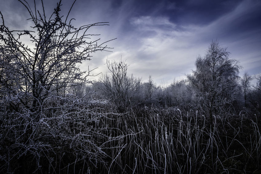 Hoar Frost Bare Tree Beauty In Nature Branch Cloud - Sky Frost Landscape Low Angle View Nature No People Outdoors Sky Tranquility Tree