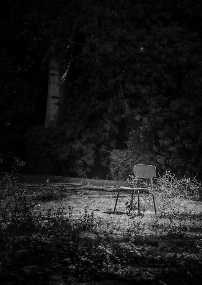 Alone... B&w Check This Out Canonphotography Shah First Eyeem Photo Bestshot Canon5Dmk3 Iranian_photography Every Picture Tells A Story Canon Canon 5d Mark Lll Street Photography Iran Tehran Alone... B&w Street Photography Niavaran Palace Tehran, Iran Tehran
