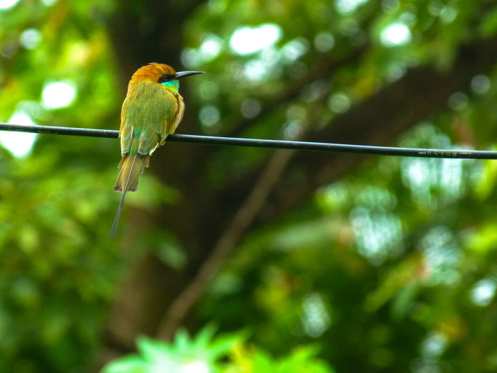 Spotted this beautiful bird on a sunny morning.... Bee Eater Bird Multi Colored Animals In The Wild Beauty In Nature Nature Outdoors Goa Bright Colors