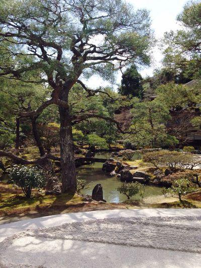 Garden Photography Zen Garden Gardening Garden Architecture Garden Decor Japan Photography Japanese Garden Nature Harmony Zen Peace And Quiet Ginkakuji Kyoto Ultimate Japan