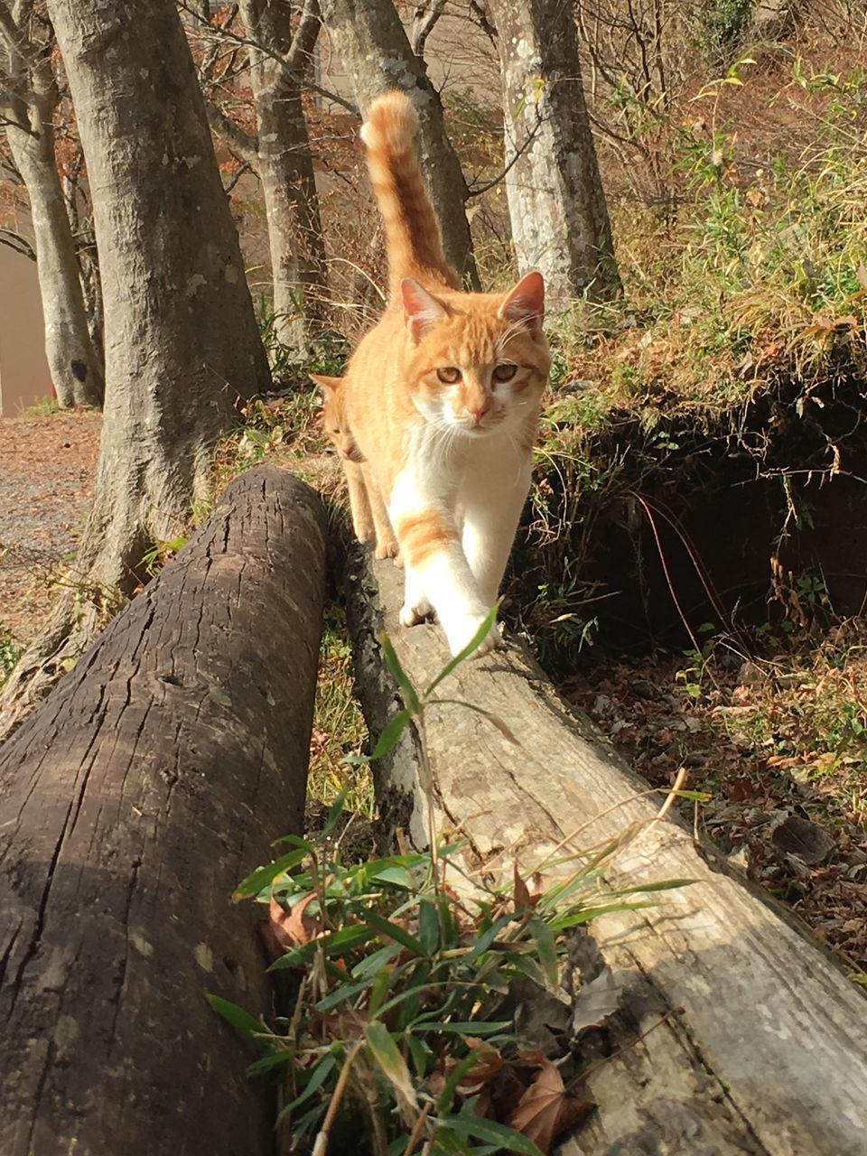 CAT IN A TREE TRUNK