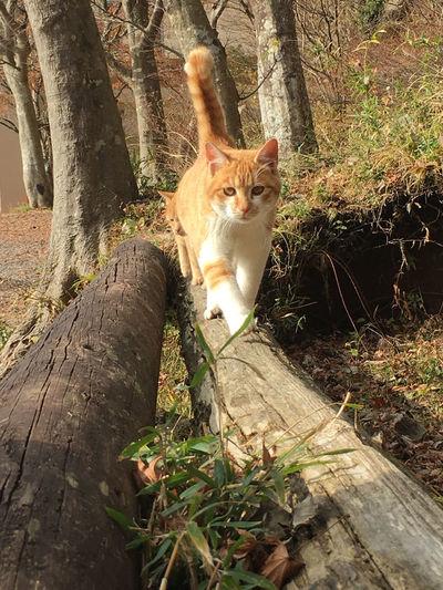 Cat lying on tree trunk