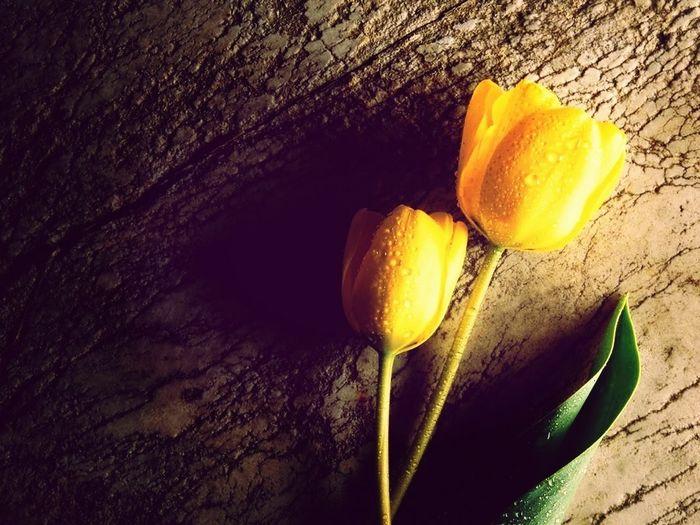 Necesito De Ti Para Que Mis Rosa Sean Tuyas...