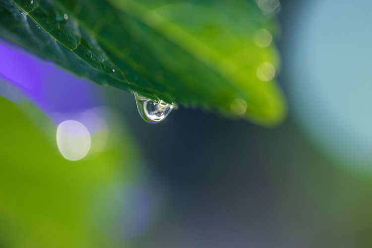 雨上がったけど、夜にもう一雨ありそう。 Drop Green Color Water Plant Wet Leaf Close-up Plant Part Nature Selective Focus Fragility Beauty In Nature Growth Vulnerability  Freshness No People Day Focus On Foreground Dew Outdoors Purity Rain RainDrop Lens Flare Blade Of Grass