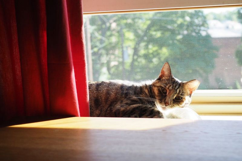 Cat sitting against window at home