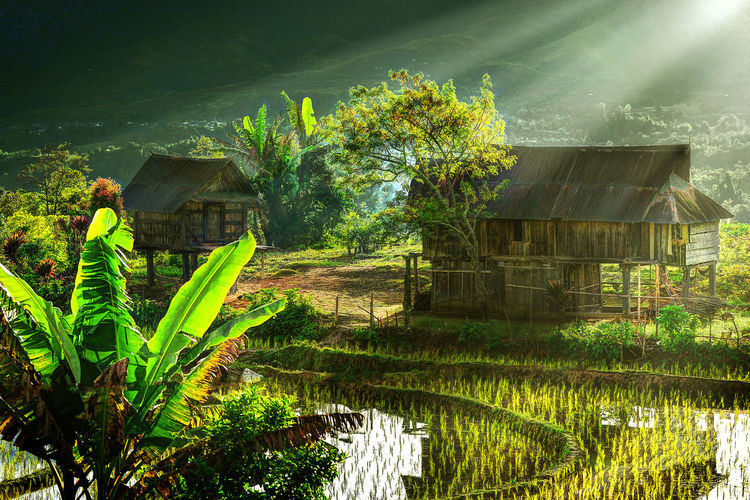 traditional house at village Light Morning Tree Agriculture Farmland Cultivated Land Agricultural Field Farm