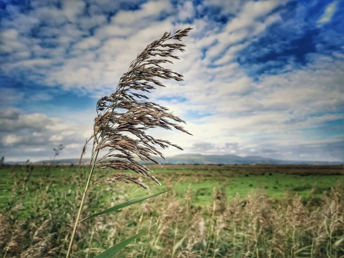 Easterly... Cloud - Sky Clouds And Sky Cloud Cloud Porn Mountain Horizon Nature Pond Life Reeds By Water Reeds Reeds, Weeds, Marshland, Marsh, Marsh Bogland Focal Point Flower Rural Scene Field Sky Grass Landscape Cloud - Sky Tall Grass Timothy Grass Horizon Over Land Countryside Lone Grassland Lakeside Farmland
