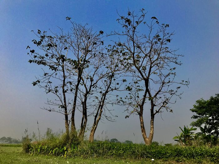 Tree Landscape Nature Tranquility Beauty In Nature Tranquil Scene Growth Outdoors Scenics Clear Sky No People Day Field Branch Grass Sky Eyeembangladesh @anickchowdhurymp EyeEmNewHere Beauty Of Bangladesh IPhoneography