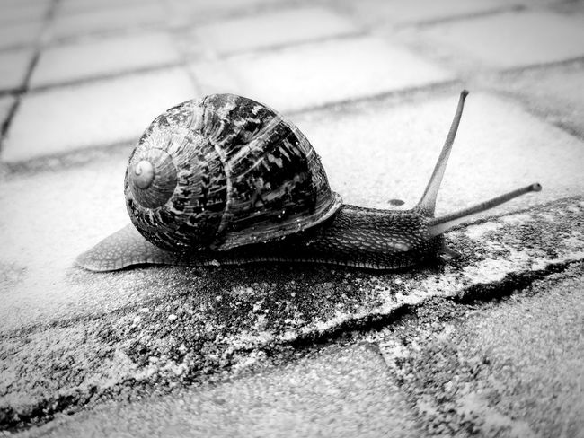 Pet Portraits EyeEm Selects Bover Snail Animal Wildlife AfterRaining Caragol Caracol