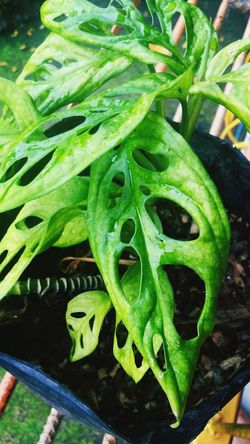 Green Color Growth Plant Leaf Nature Close-up Freshness