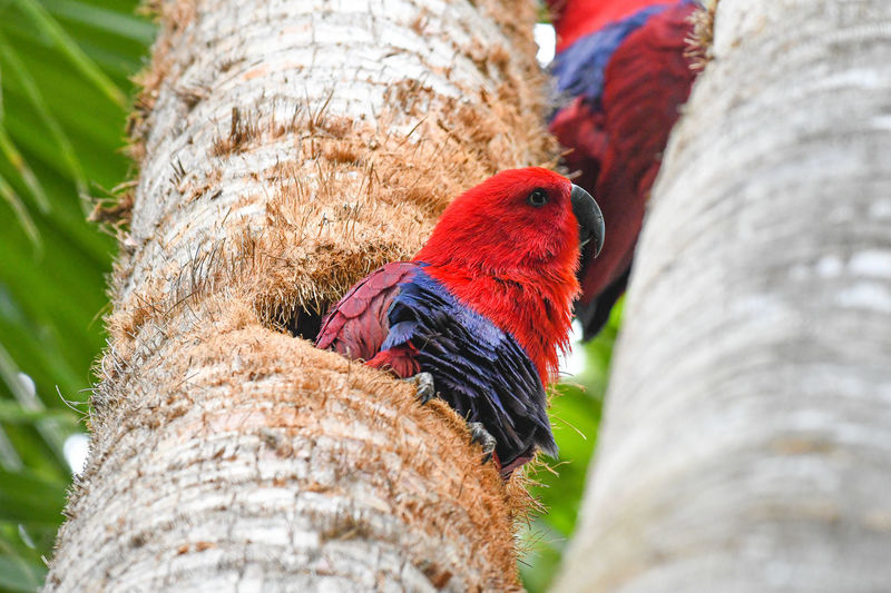 Low angle view of parrot perching on tree trunk