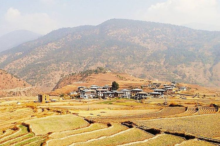 Golden days with all earth and sun and no concrete Taken in Paro, Bhutan Instasgsundayearth Instasgsunday10pm Whpmyoasis