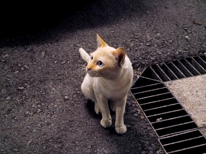 High angle view of cat sitting by gutter on road