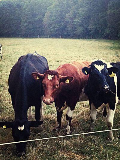 Got Milk?  Country Urban Nature