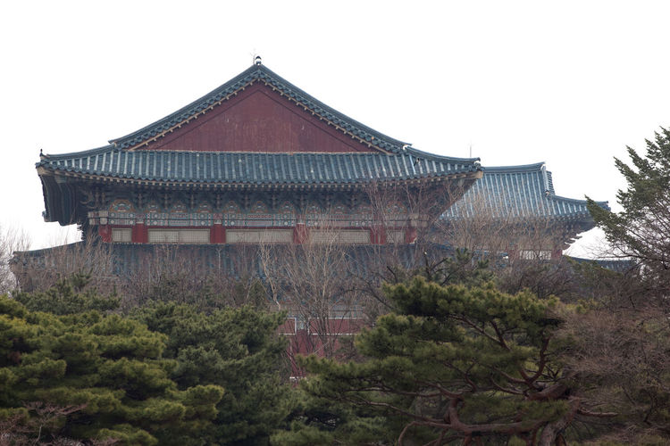 Architecture Building Exterior Built Structure Clear Sky Day Exterior Growth Gyungbok Palace Historic Building Historic Place History House Low Angle View National Museum No People Old Outdoors Palace Place Of Worship Religion Roof Sky Temple - Building Tower Tree