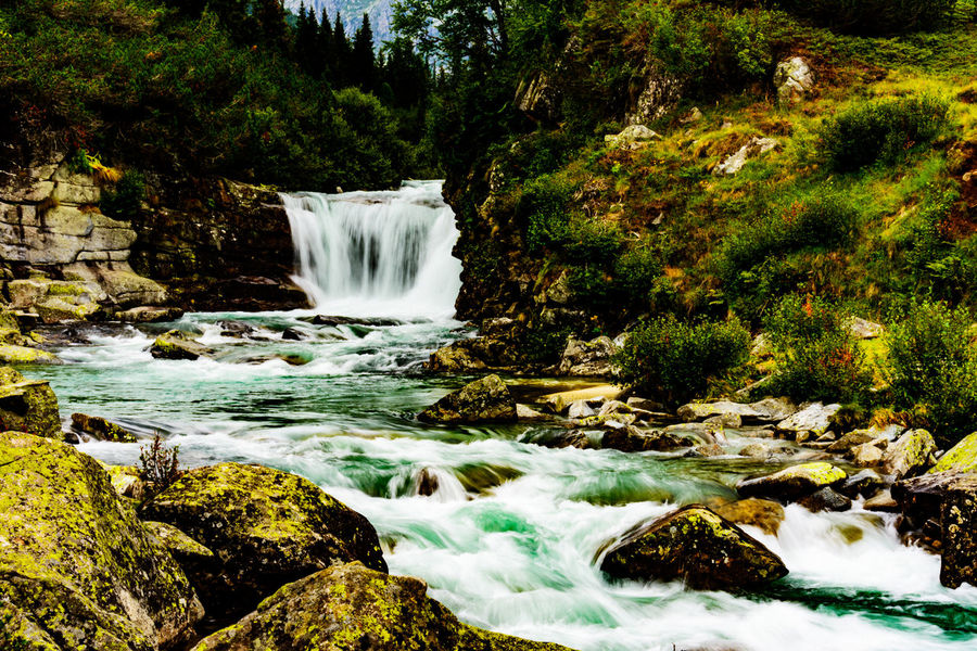 Trekking Trentino  Fir Forest Forest Green Grass 🌱 Holiday In Mountain Mountain River River Fall Rocks Summer Tranquil Scene Val Di Fumo Water