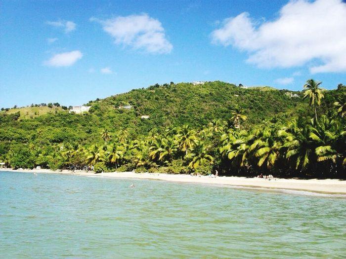 Caribbean Beach Palmtrees Brewers Beach Tortola