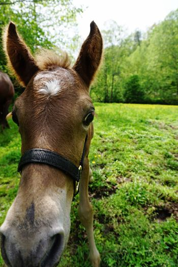 Nature's Diversities Freedom Horse Kentucky  Curiosity