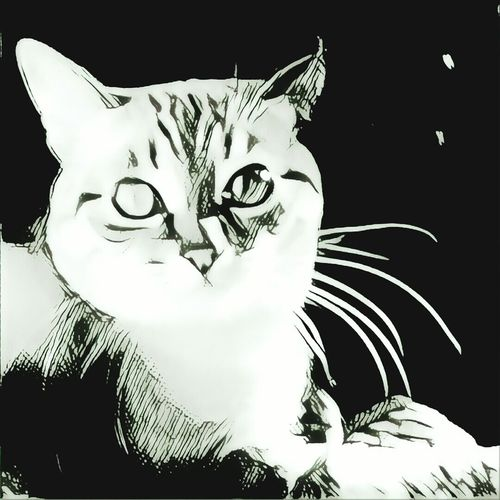 Portrait Looking At Camera Domestic Cat Human Eye Paper Feline Human Body Part Adult People Looking At Camera One Animal Domestic Animals Whisker Animal Eye Cat Backgrounds The Painter Painting Art Artwork Art And Craft Art, Drawing, Creativity Drawing - Art Product Drawing Outdoors Day