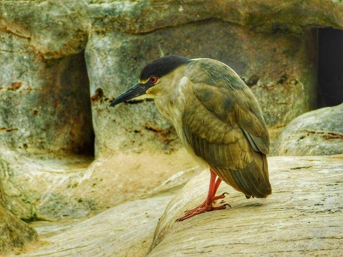 Bird Birds Of