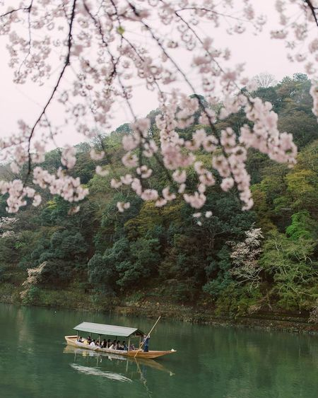 Ultimate Japan Japan Kyoto Sakura2016 Ktraveljourney Dividiary Naturelovers Travel Photography Travel Natural Beauty