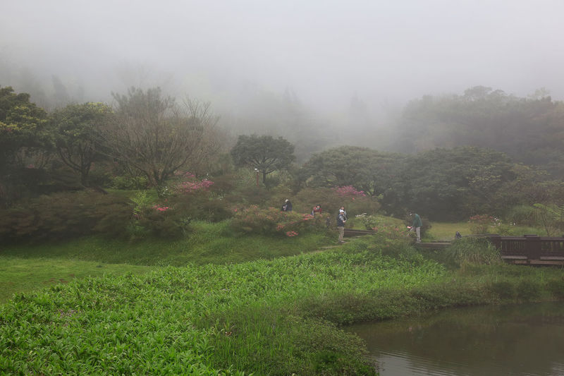 Plant Tree Water Fog Nature Beauty In Nature Tranquility Scenics - Nature Environment Growth Tranquil Scene Grass Landscape Day No People Land Green Color Field Outdoors