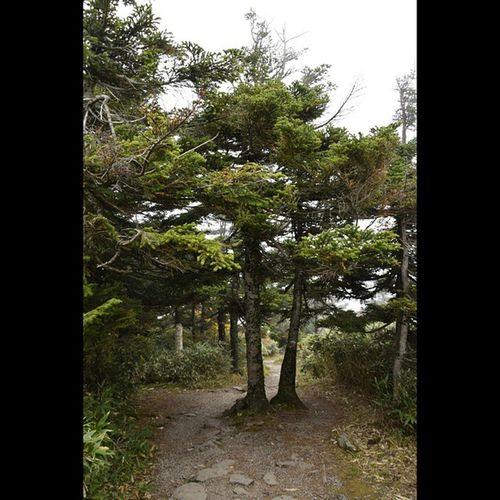 風景 八甲田山 遊歩道