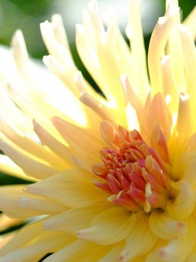 Flower EyeEm Nature Lover Natural Nature_collection Naturelovers Nature Flowers Daria Yellow Yellow Flower