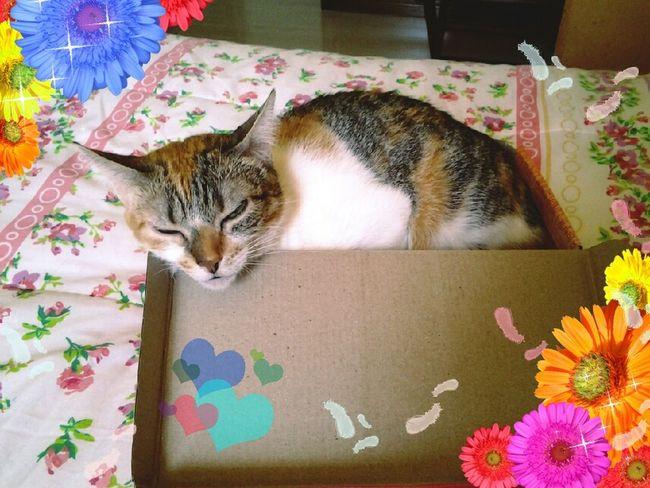 Tina foi pra caixa! Pet Cat Sleeping