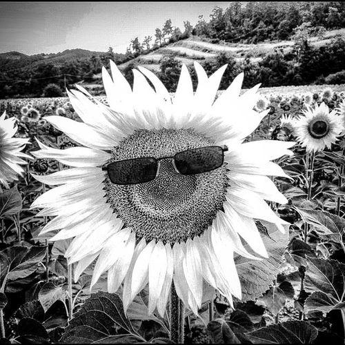 Topoli, Tuscany, Italy. TOpoli Tuscany Visitarezzo Anghiari Italygram Italia Italy Toscana Travel Smile Sunflower Sunflowers Happy Sky Blackandwhitephotography