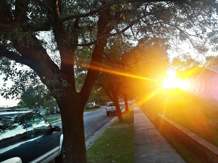 Car Tree Sun Sunlight Outdoors Road Sunset No People Nature Day Sky Nature Mobile Phone Sunlight Yellow EyeEm Selects