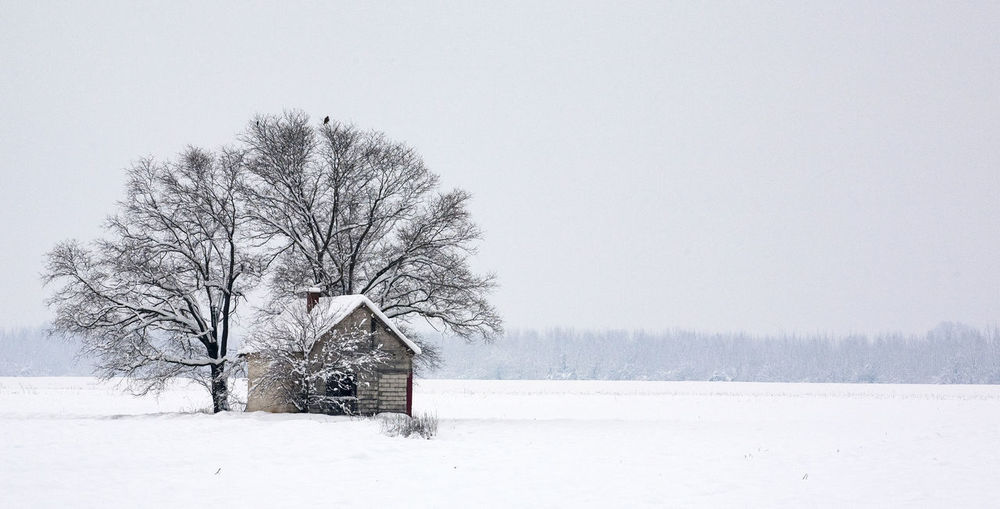 WINTER FAIRY TALE Snow Winter Cold Temperature Tree Bare Tree Landscape Environment Land Plant No People Scenics - Nature Beauty In Nature Field Sky Tranquility White Color Nature Tranquil Scene Snowing Outdoors Extreme Weather Blizzard