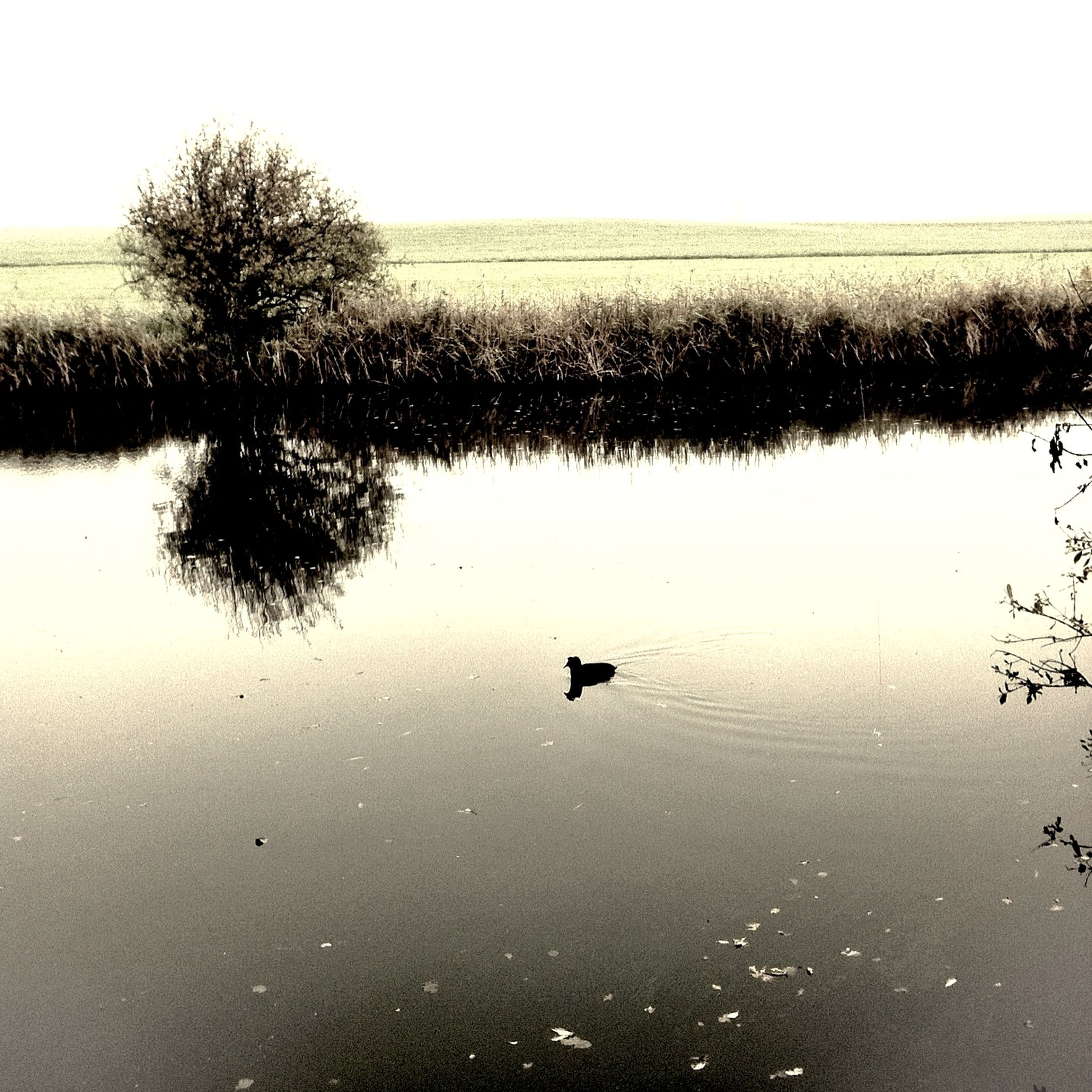 water, reflection, lake, bird, animal themes, tranquility, waterfront, tranquil scene, wildlife, one animal, animals in the wild, nature, clear sky, beauty in nature, scenics, tree, sky, flying, duck, standing water