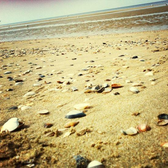 Ein Tag am Meer.. Beach Sea Moules