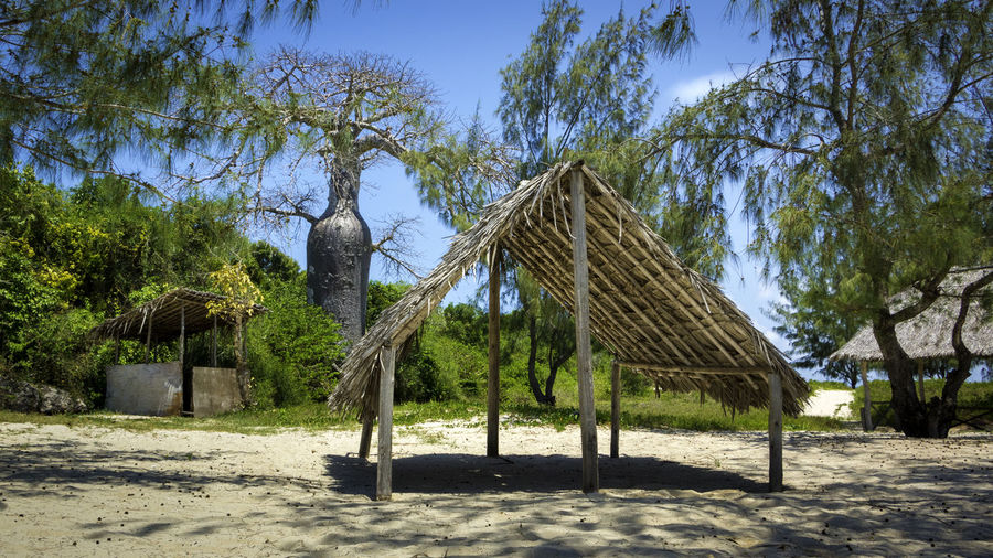 Lower Sinda Beach Abandoned Adansonia Digitata Awesome Baobab Baobab Tree Beach Chilling Nature No People Sand Tree Neighborhood Map Lower Sinda Live For The Story Live For The Story