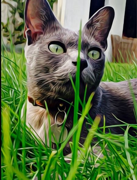 Pets Grass Domestic Cat Domestic Animals Lying Down Green Color Laying In The Grass Lifestyles Domestic Life Mammal Close-up Animal Themes Brilliant Moments Sunlight Kitty Kitty Meow🐱 Grey Cat Beauty In Nature Nature Tranquil Scene Tranquility Kickin It Tail GreenEyes. Kitty Cat ♡ Paint The Town Yellow