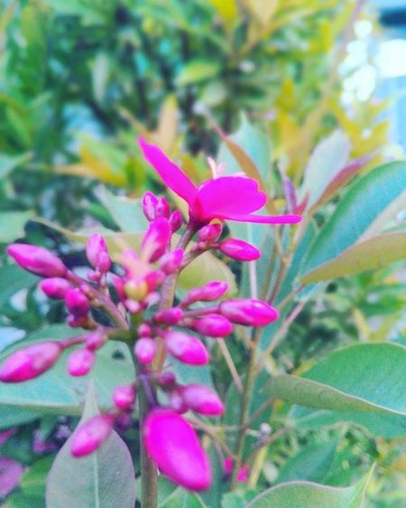 Flowers Flowers Wonogiri Beautiful Pink Depthperception Practicedaily Practice Indonesia_photography INDONESIA Motion Blur