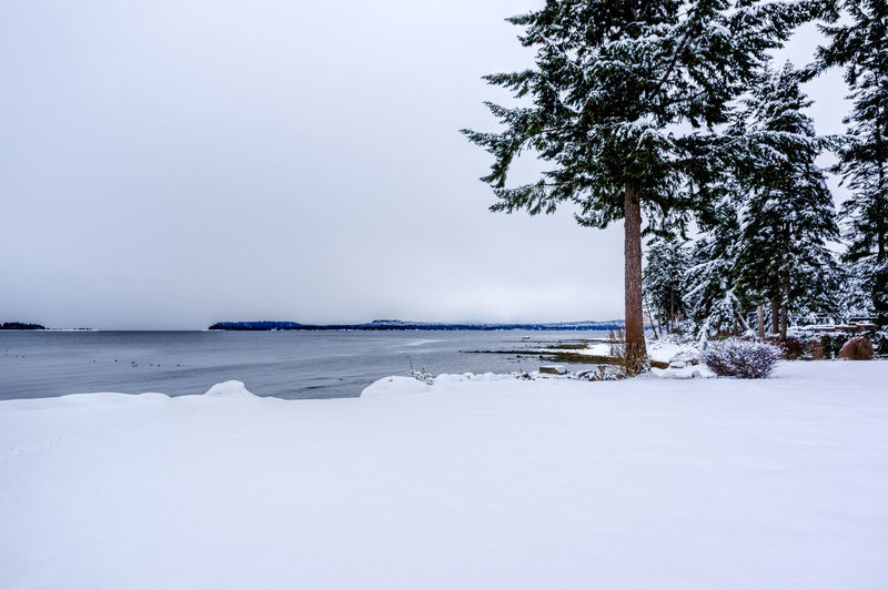 Beach Beauty In Nature Cold Temperature Day Horizon Over Water Landscape Nature No People Outdoors Scenics Sea Sky Snow Tranquil Scene Tranquility Tree Water Winter