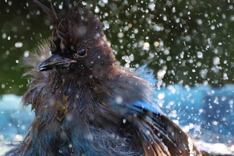 Close-up of a bird splashing in water