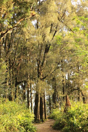 Forest Cerrodelborrego Canont3 Bosque Arboles Green Vereda Trees