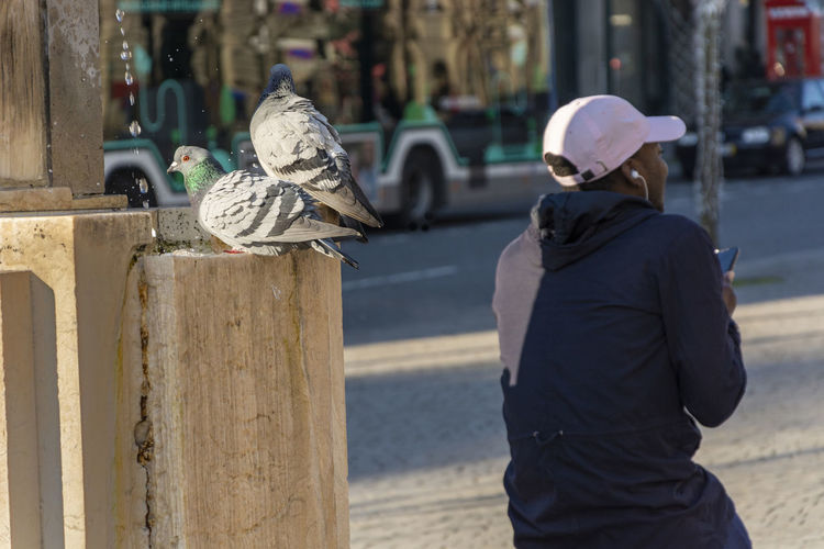 Rear view of man holding bird perching in city