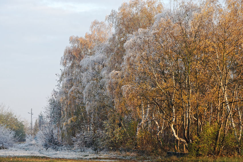 Winter is is hiding in the shadows Autumn Autumn Colors Autumn Leafs Autumn Leaves Changing Weather Freezing Frost Nature Photography Winter Cold Days Cold Temperature Contrasting Colors Fragility Frosty Mornings Frosty Nature Season Change Subzero White Snow