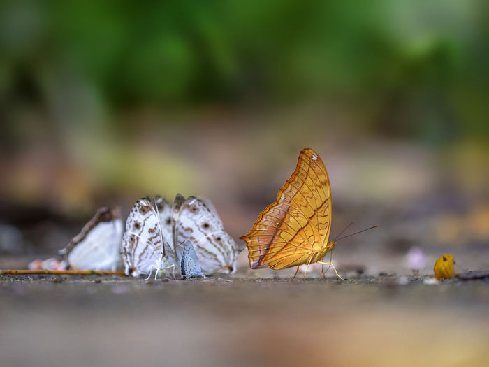 Surface Level Of Butterflies On Ground