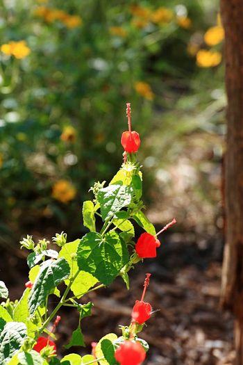 IH20 Wildlife Preserve Flower Fragility In Bloom Springtime Beauty In Nature Nature Red Bishop's Cap