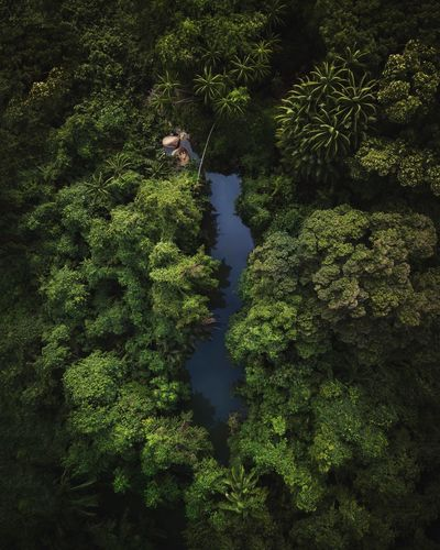 Malaysian Jungle Growth Tree High Angle View Nature Beauty In Nature No People Day Water Land Outdoors Tranquility Shadow Sunlight Lush Foliage Foliage Scenics - Nature Tranquil Scene