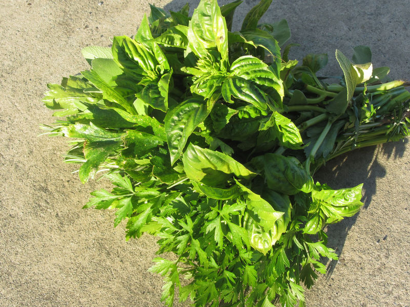 Bunch of fresh basil, parsley and sage hand picked from the garden in a Tuscan farm Agriculture Aromatic Herbs Basil Bunch Collection Crop  Diet Farm Flavorful Food Fresh Garden Green Harvest Healthy Food Herbs Leaf Mediterranean Cuisine Parsley Picked Plant Sage Scent Vegetable Vegetarian Food