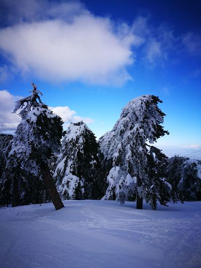 Snow Cold Temperature Blue Winter Landscape Tree Nature Scenics Sky No People Outdoors Mountain Day Troodos Mountains Platres Village Forest Nature Birds Lost Abandoned Forgotten Mountain Resort Trees Nowhere Peace Tranquility Animal Themes Peace And Quiet Beauty In Nature Nature Winter Tree