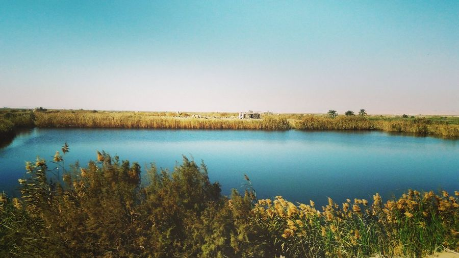 Everydaymoments Egypt Egyptphotography Nature Fayoum Egypt Exploring EyeEm Best Shots EyeEm Nature Lover Farmland Agricultural Field Field Countryside Grass Area Farm Reed - Grass Family Cultivated Land Growing Tranquil Scene